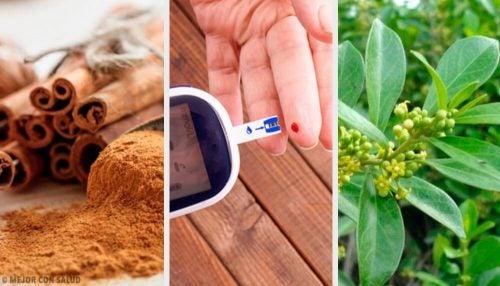 5 лекарственных растений, которые помогают контролировать диабет
