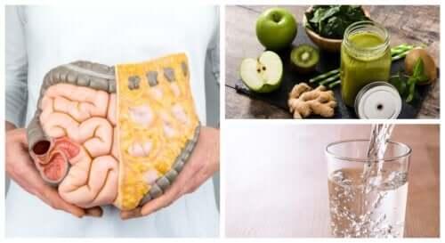 Как очистить кишечник от токсинов естественным образом?