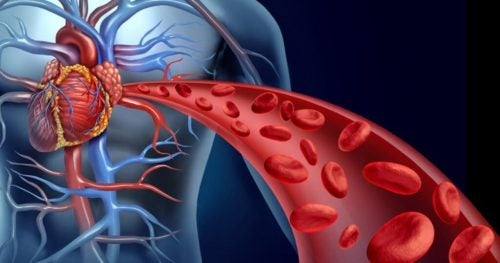 Менопауза и кровообращение
