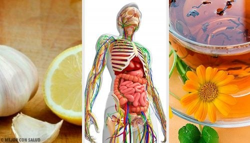Детоксикация лимфатической системы: 6 натуральных средств