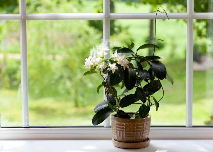 Очищать листья комнатных растений от пыли