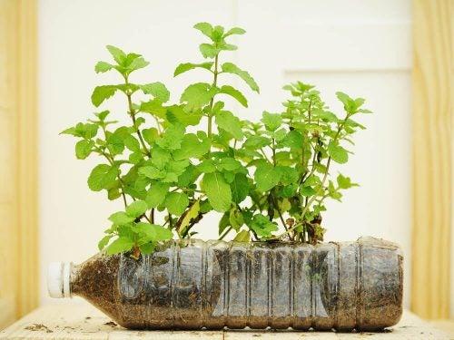 Горшки для растений из пластиковых бутылок