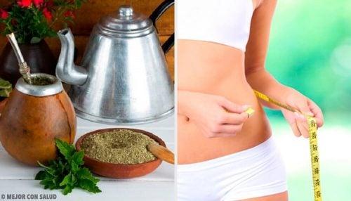 Как южноамериканский чай мате поможет похудеть?