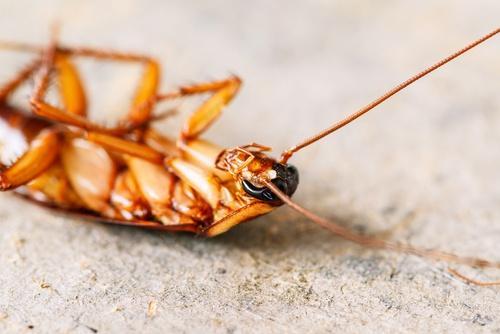 Натуральные средства для отпугивания насекомых