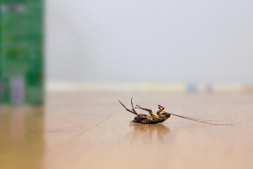 4 трюка для отпугивания тараканов без использования инсектицидов!