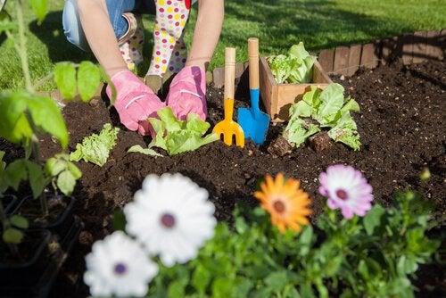7 советов, как использовать уксус в саду для ухода за растениями