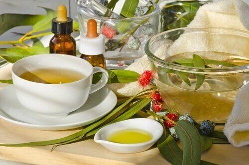 Эвкалипт и чай из него
