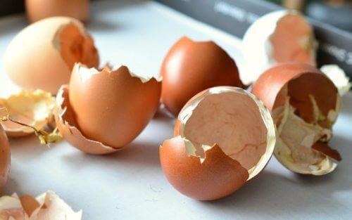 Яичная скорлупа как органическое удобрение