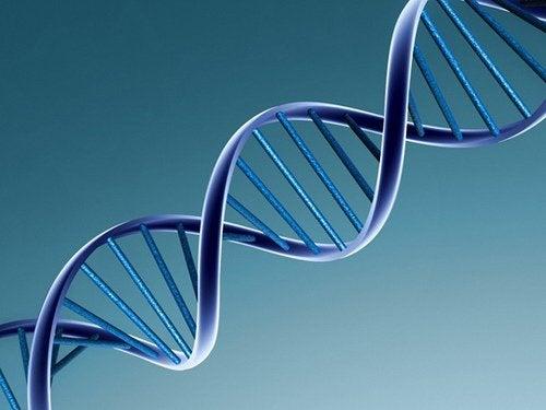 Близнецы и ДНК