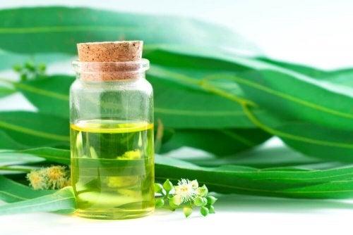 Масло эвкалипта и натуральные антибиотические средства