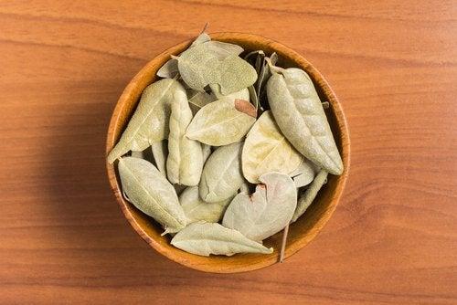 Сушеные листья болдо