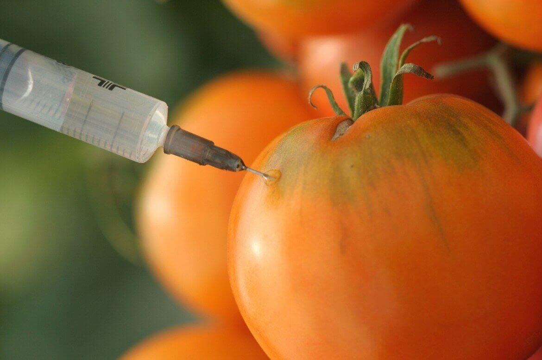 Трансгенные продукты и канцерогены