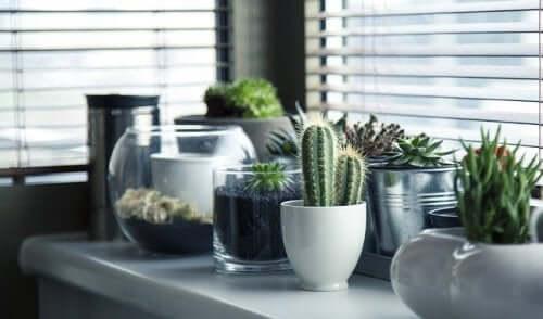 5 оригинальных способов выращивать кактусы: практические советы