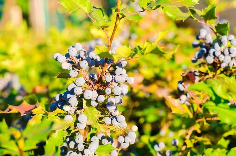Виноград и псориаз