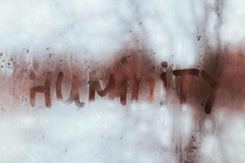 Повышенная влажность дома: как распознать проблему?