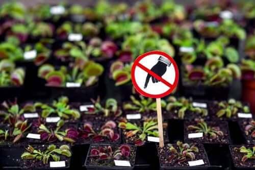 Опасные растения: 7 разновидностей, которые не стоит держать дома