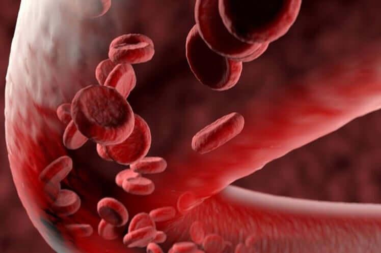 Васкулит и кровеносные сосуды