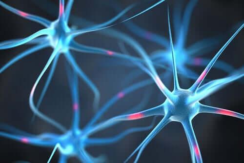 Жир и нейроны
