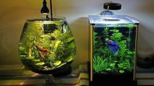 Лучший способ очистить аквариум