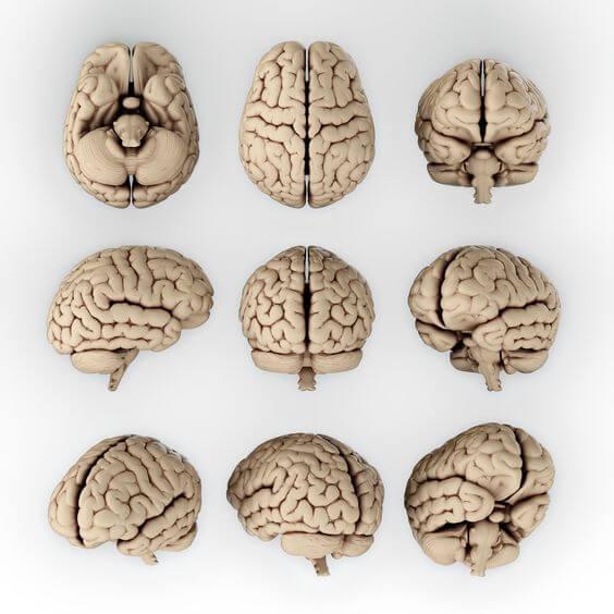 Мозговые доли: за что они отвечают?