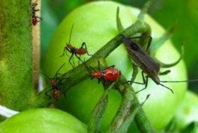 5 ядов для уничтожения вредителей