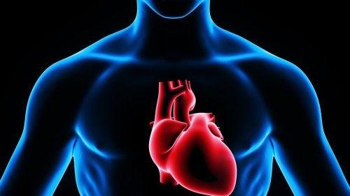 Сердце и внутрисердечная инъекция