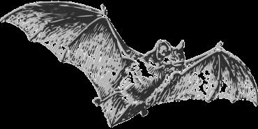 """Летучие мыши: """"виновники"""" эпидемии коронавируса"""