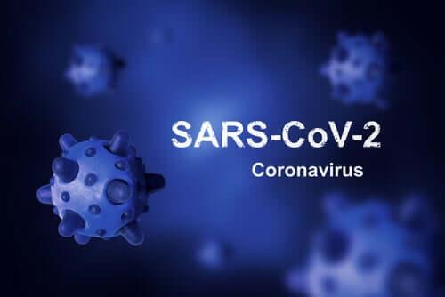 Откуда взялся коронавирус и почему его не получается уничтожить?